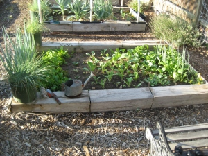 Garden September 2012